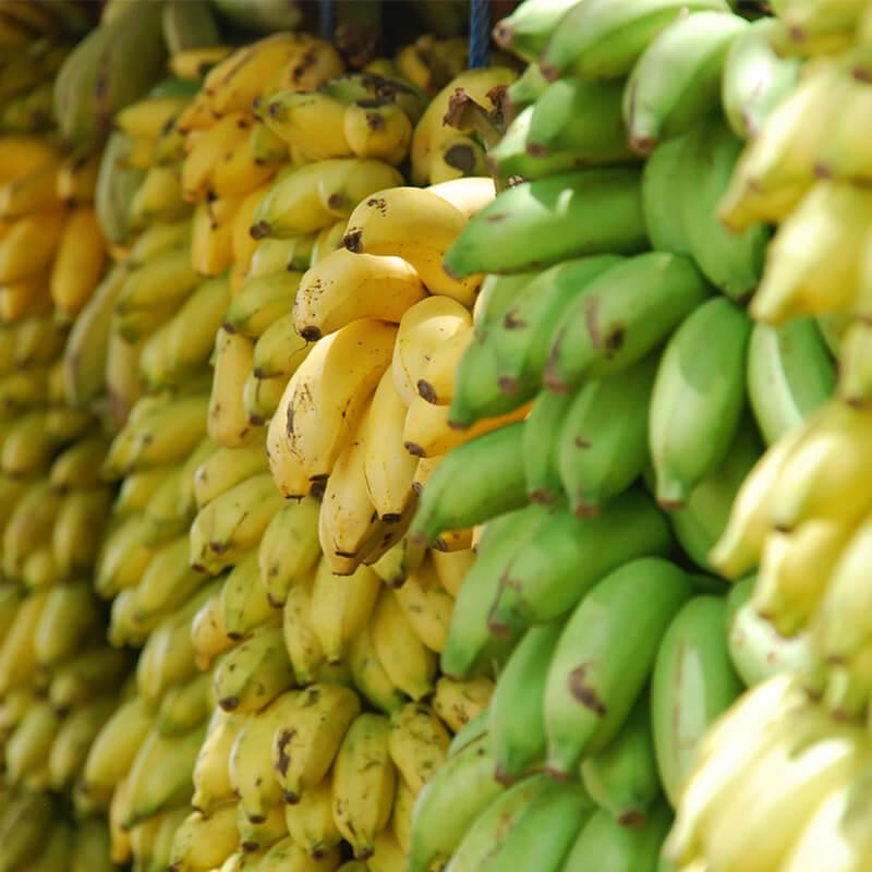 Bananer til Gul Sol Smoothie Opskrift