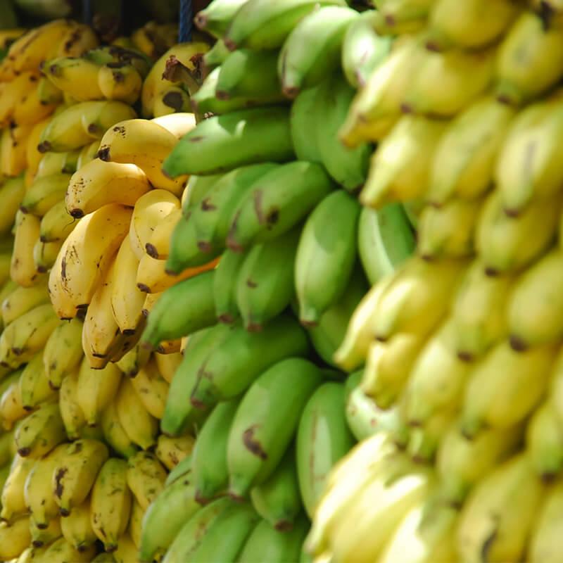 Banan i Blåbær Smoothie Opskrift